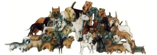 Società Italiana Terriers